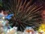 26-10-2012 Playa chicka Rob Turner